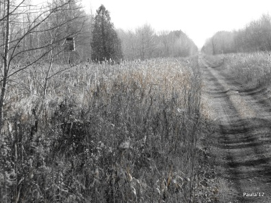 Railway Trail - Grey County
