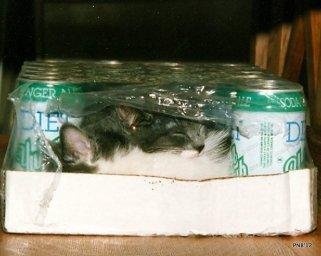 Pop Case Kittens - thetemenosjournal.com