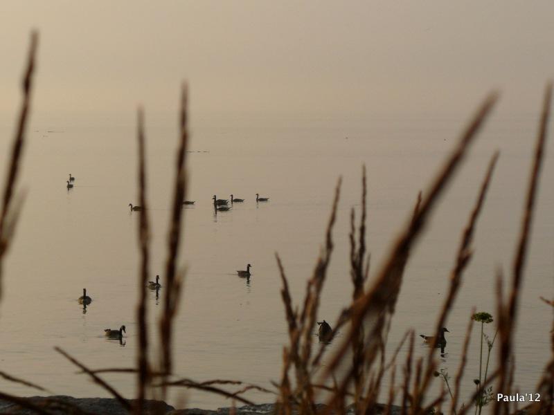 Lake Ontario - early morning