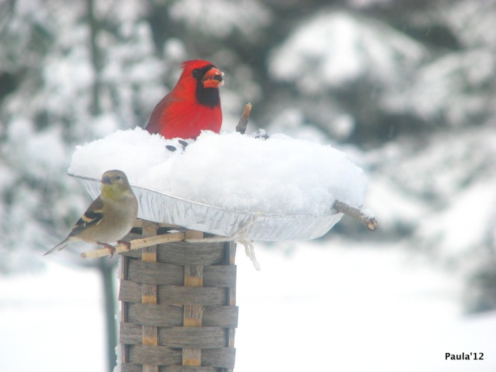 Winter - Cardinal & Goldfinch