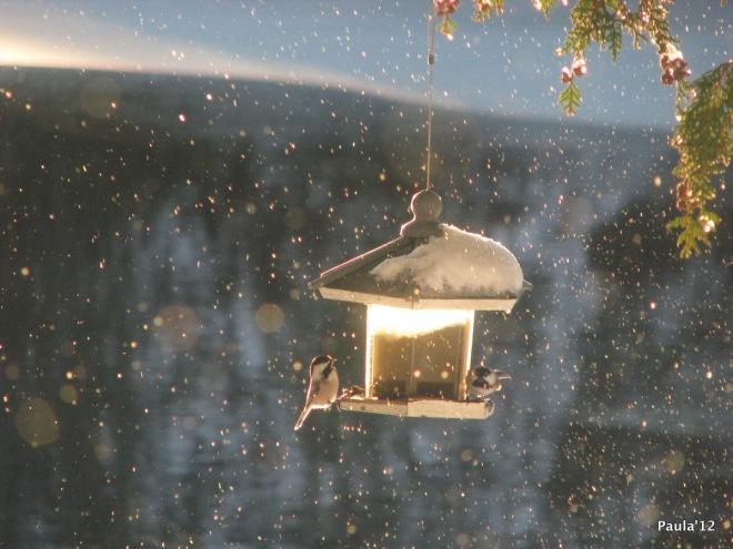 Winter - Chickadee