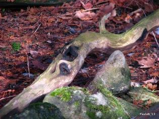 Sculptural driftwood