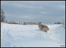 Irish in Snowbank