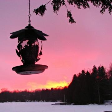 Sunset & Bird Feeder