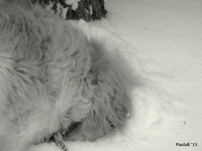 Head in Snow