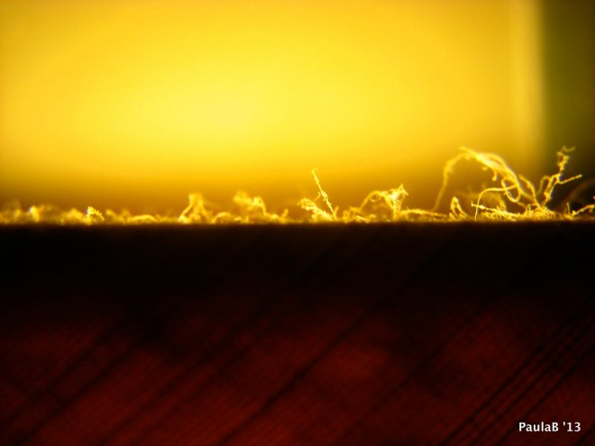 Dust on Lampshade