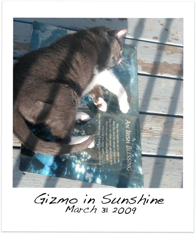 Gizmo in Sunshine