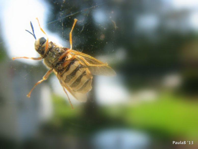 Bee on Windowpane
