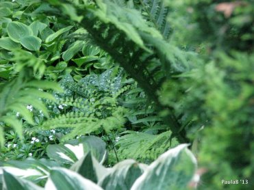 Hostas, Ferns & Lungwort