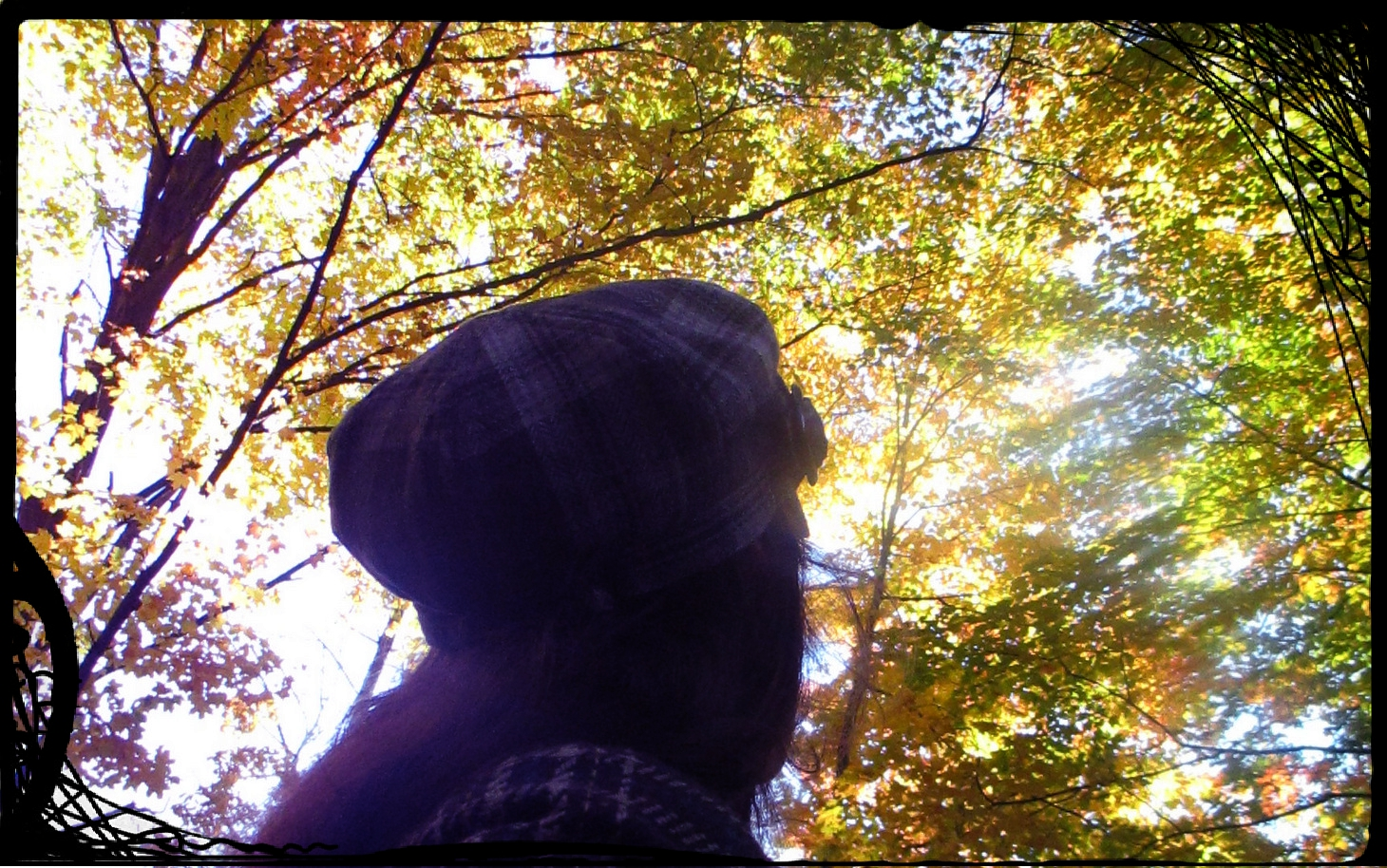 me and the trees October 2014