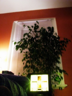 Fred The Ficus - thetemenosjournal.com