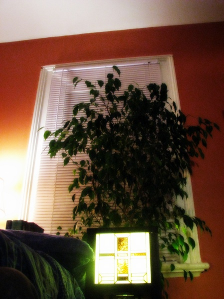 Fred the Ficus