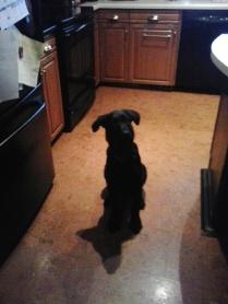 Stella is 16 weeks old...