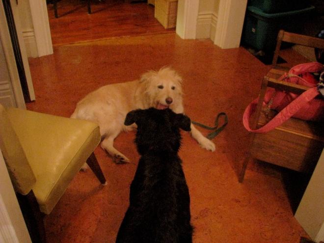 Stella and Irish