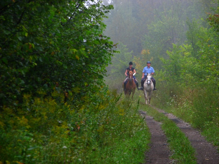 Horse and Rider in the Mist