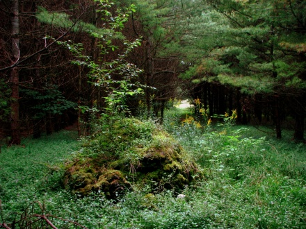 Abandoned Pathways