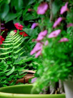Nicotina and Ferns
