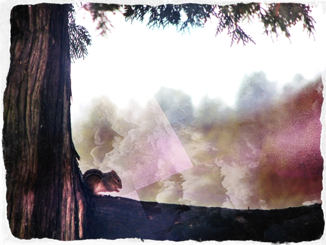 Chipmunk on a cedar branch - Irish Lake
