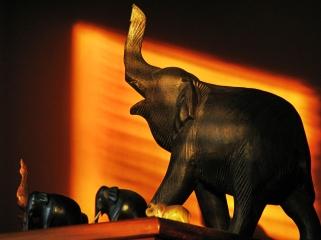 elephant-walk