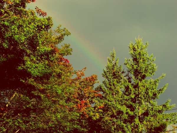Rainbow over Cedars
