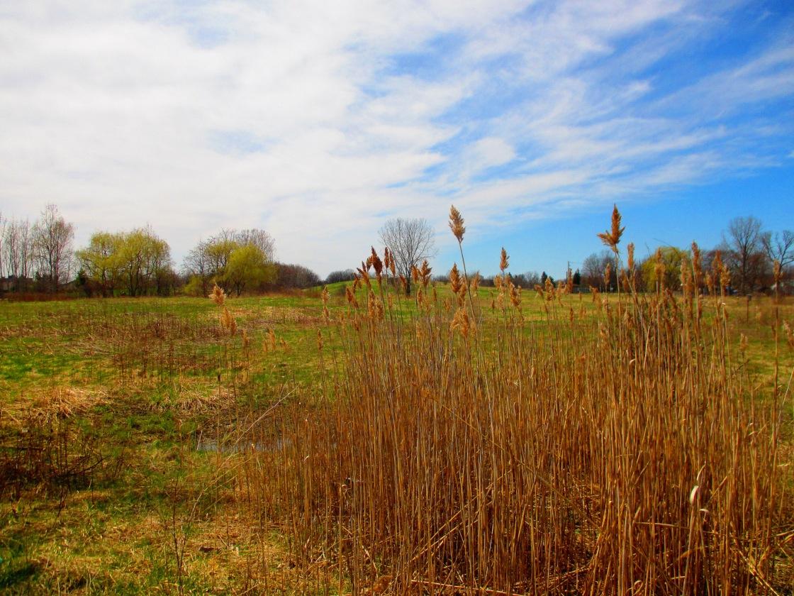 Euston Meadow
