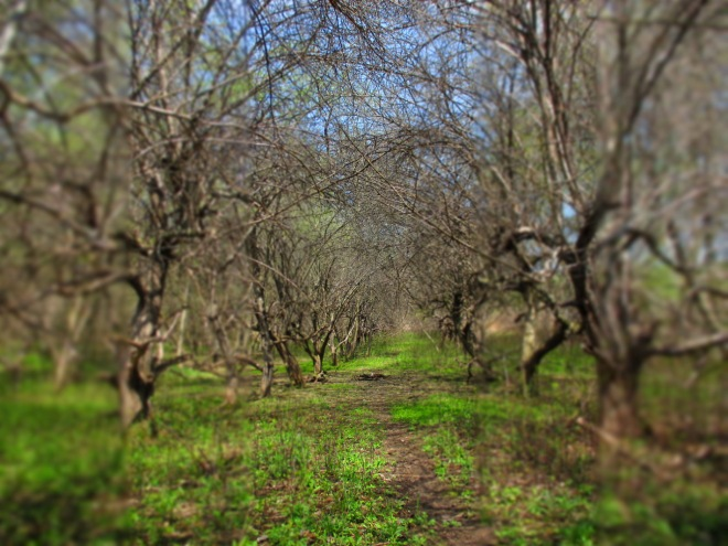 aT tHE oRCHARD