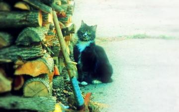 Thomas the Cat