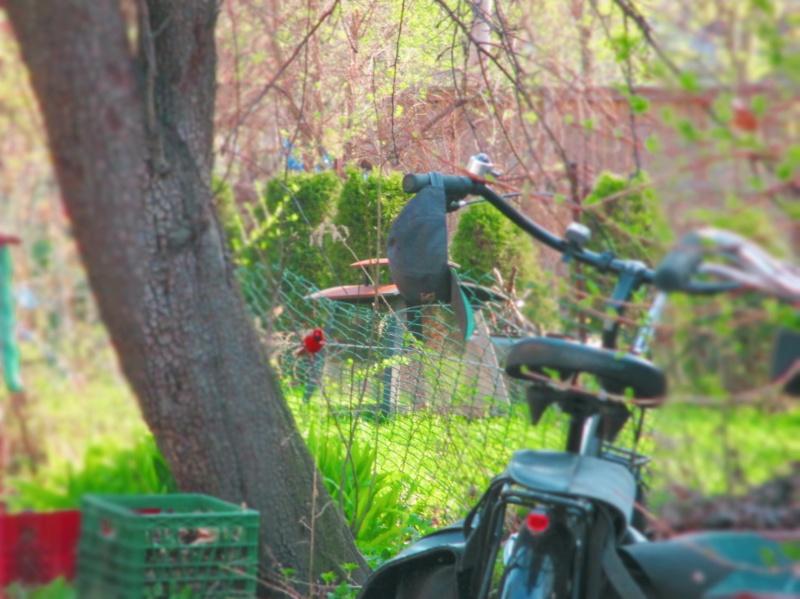 d3s bike and hat in backyard - thetemenosjournal.com