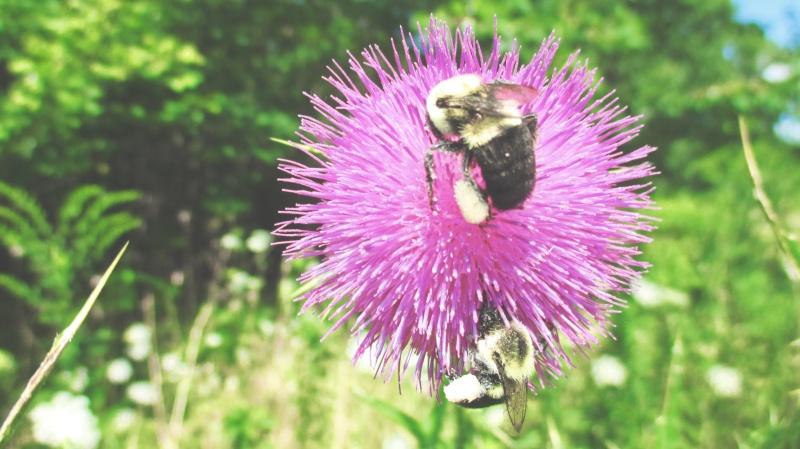 the bees august 12th, 2015 - thetemenosjournal.com