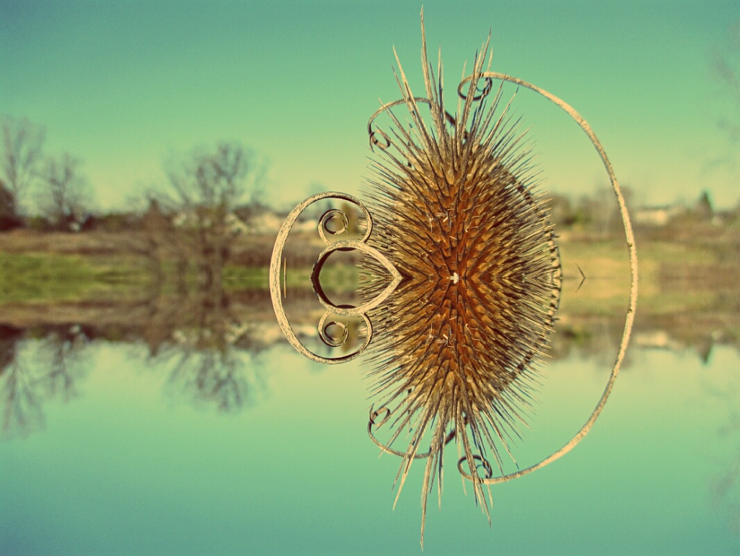 Teasel in meadow