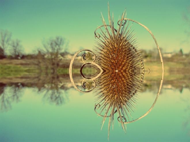 Teasel in meadow