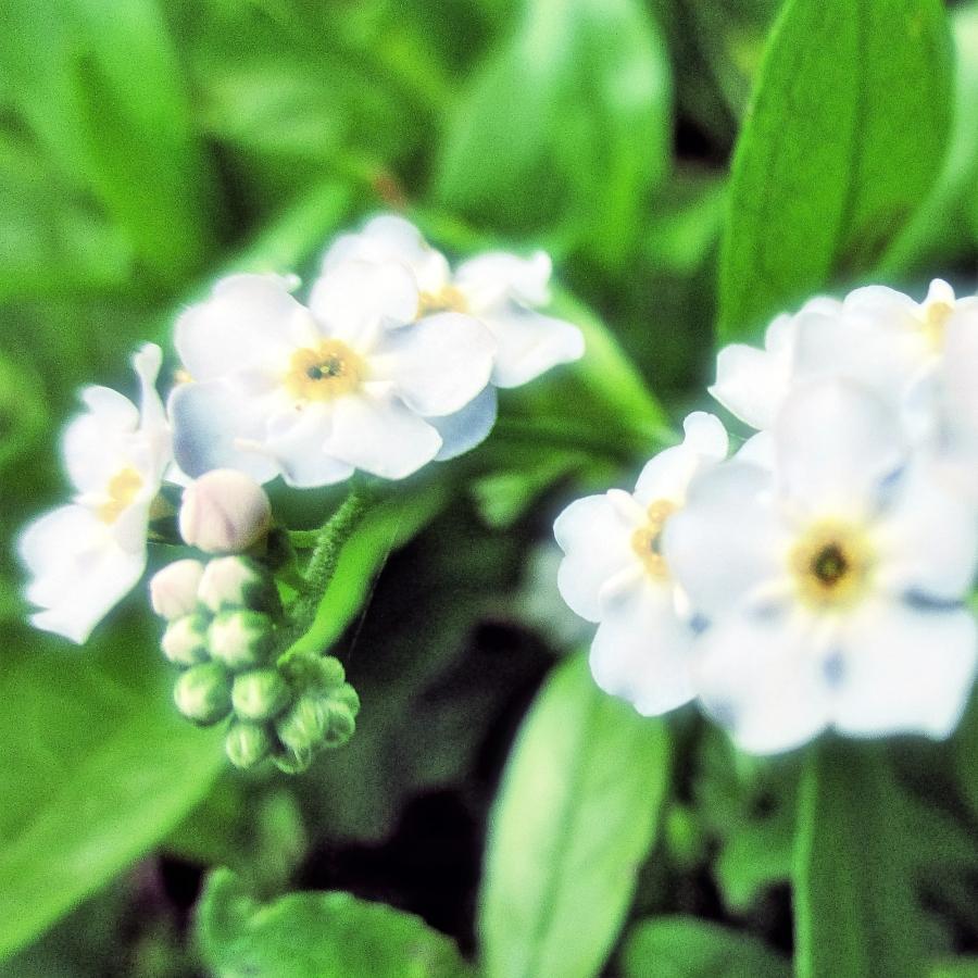 wildflower-2