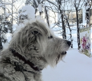 winter-scene-4