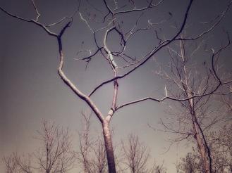 coves-april-d