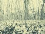 landscape - treeline