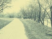 landscape-7
