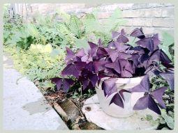 garden-3