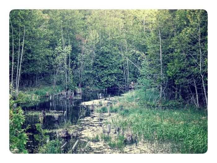 Glenelg Klondike Forest - thetemenosjournal.com
