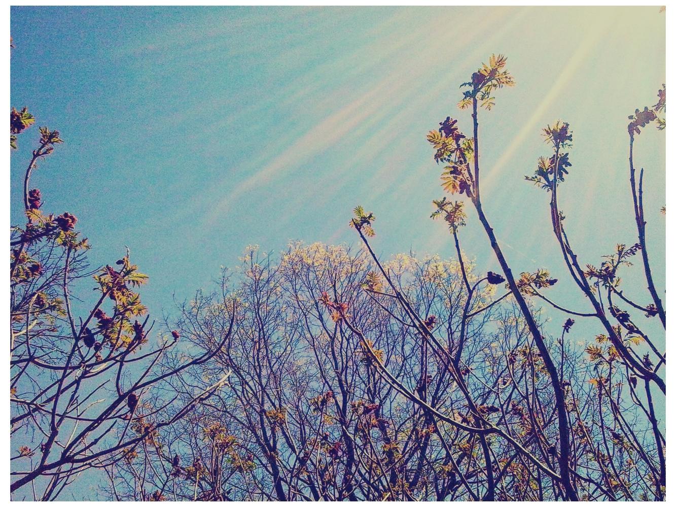 Sky Of Joy