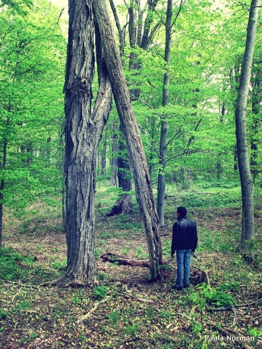 Tim with Big Tree