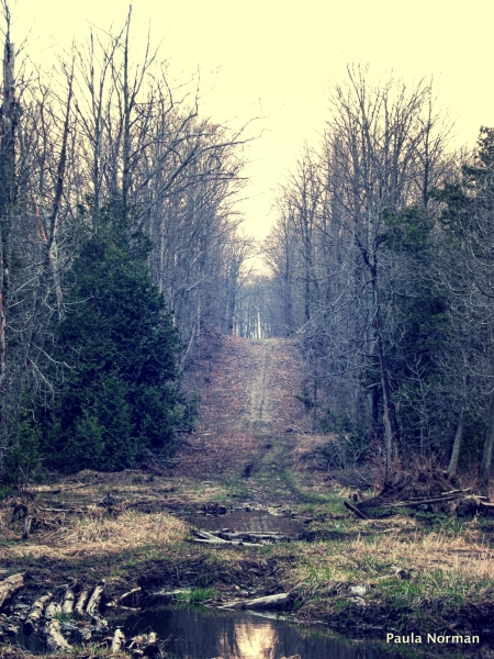 8th concession, Grey County - The Klondike Forest