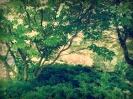 Dogwood & Maple