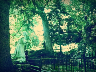 The Girl & The Oak