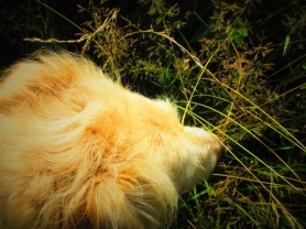 irish in the orchard