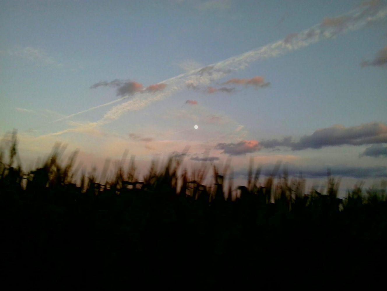 moon over cornfield