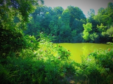 the coves pond