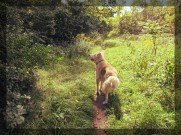 dog-days_3
