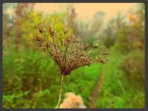 fall_6