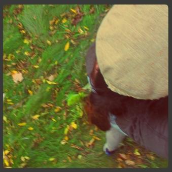 fall_7