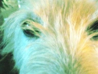 irish-lashes